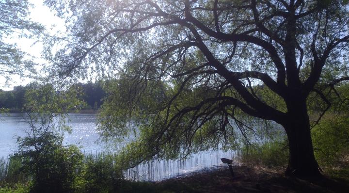 Finnish Summer tree